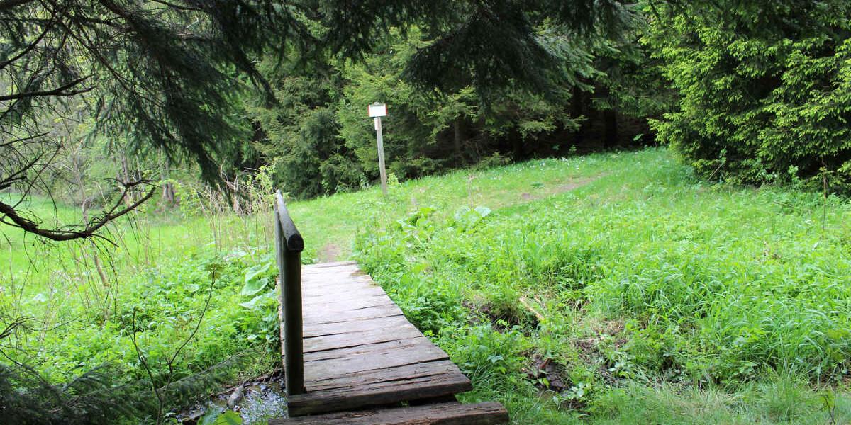 Kräuterwanderung von Tanne nach Königshütte
